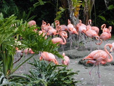 Flamingos en Miami - Foto por Yin Zhi Shakya - 13 de julio 03